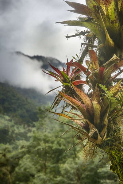 Ecuador Cloud Forest-9984_HDR