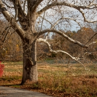 valley-forge-0494-edit