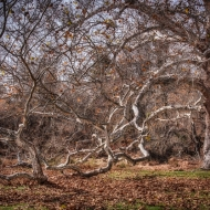 valley-forge-0820_hdr-edit-edit