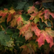 valley-forge-leaves-9338_hdr-edit